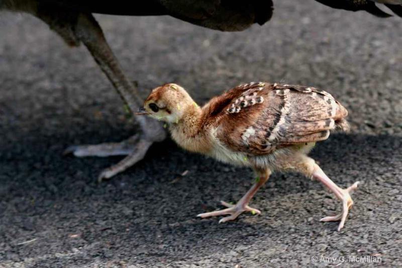 Steppin' Out - ID: 11682689 © Amy G. McMillan