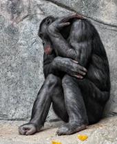 Depressed or Sulking