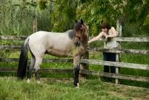 Enchanted Stallion
