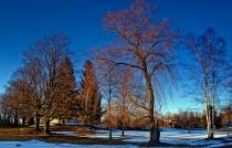 Evening Trees 2