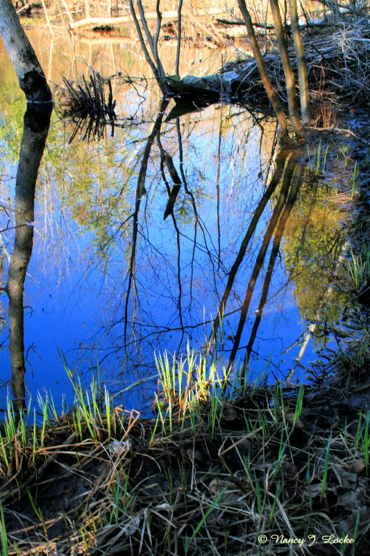 Spring Creek Reflections