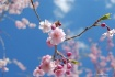 Pink, Blue Sky an...