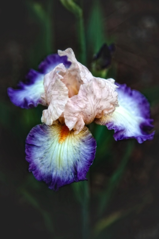 Showy Flower