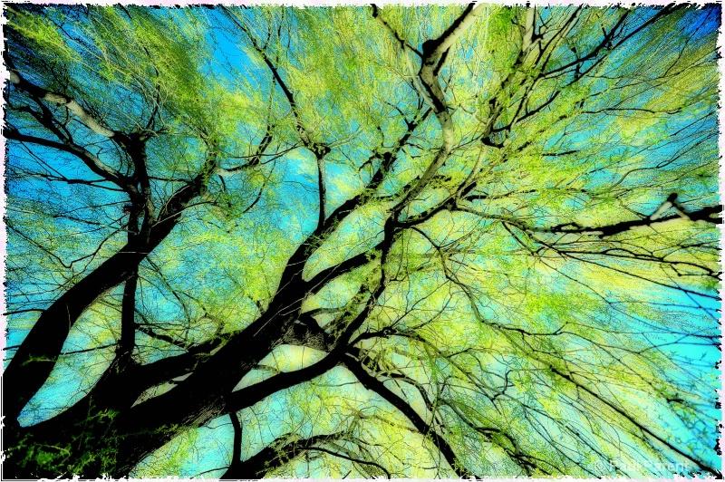 Colors - ID: 11734681 © paul parent