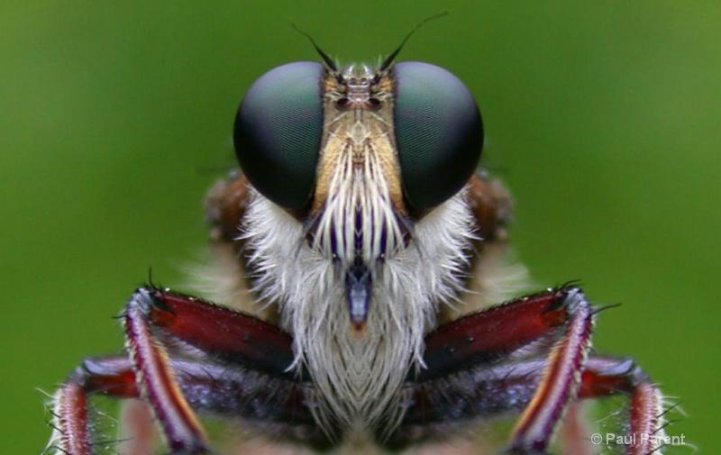 Bug Me - ID: 11736428 © paul parent