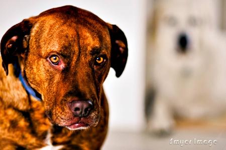 Portrait of Rex with Koda