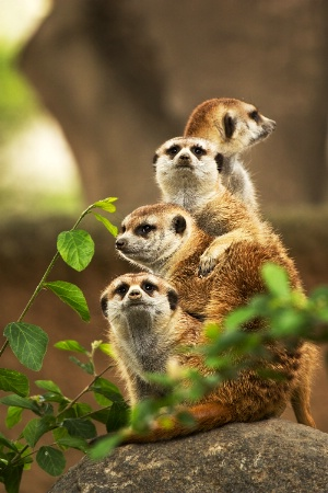 Sharing Lookout Duties