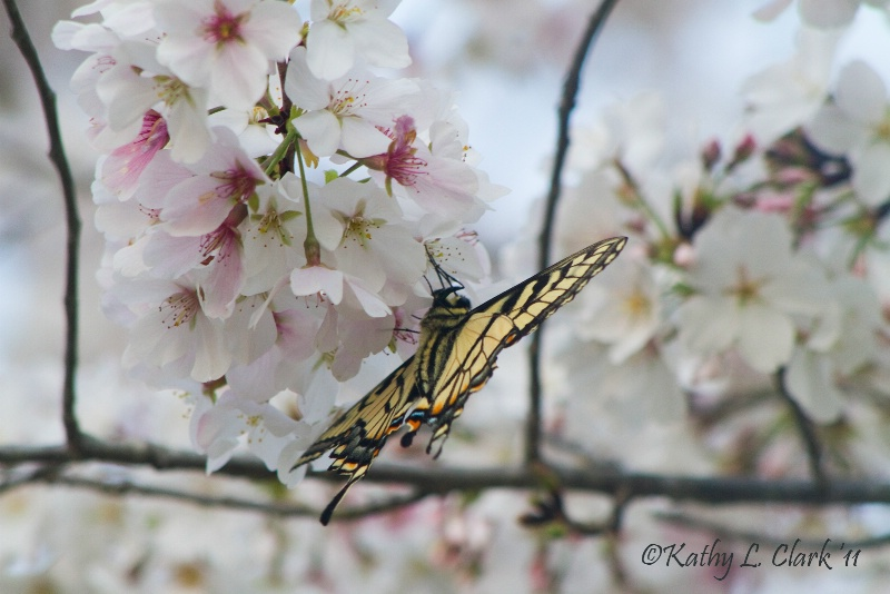 The Glorious Nature of Spring