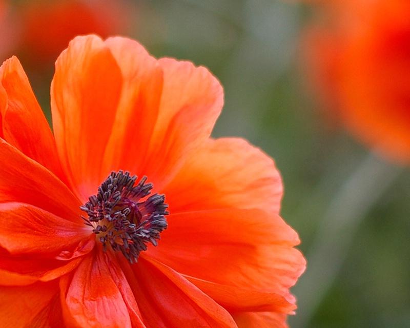 Touch of Orange