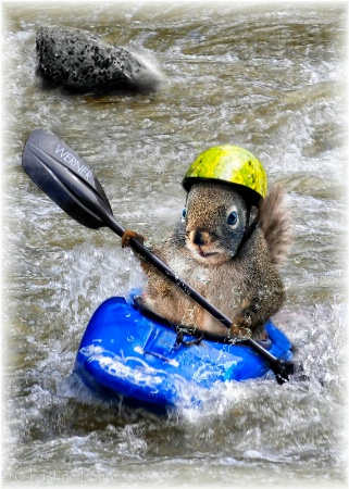 Kayaking Squirrel