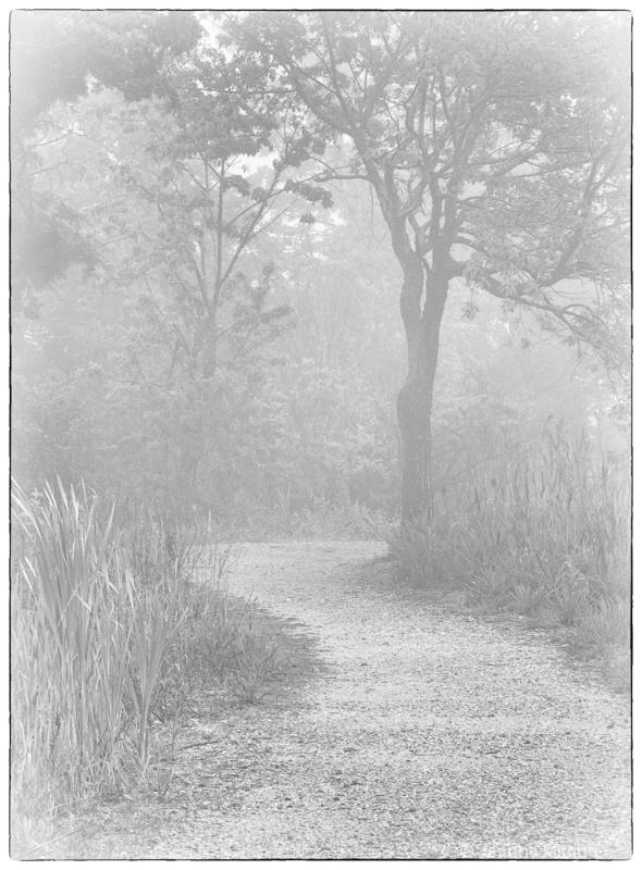 Bird Sanctuary, Cape May, NJ - ID: 11773385 © Jeanne C. Mitcho