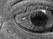 Reflective eye (l...
