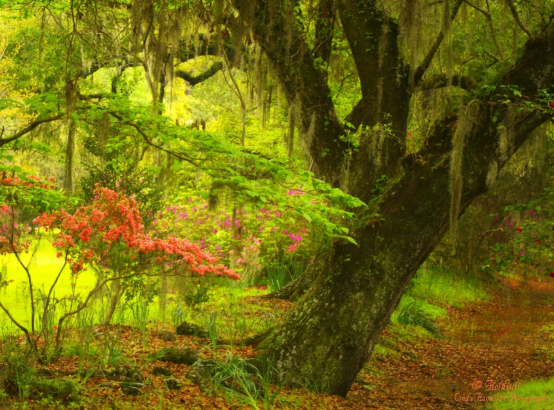 Rainy Day Spanish Moss