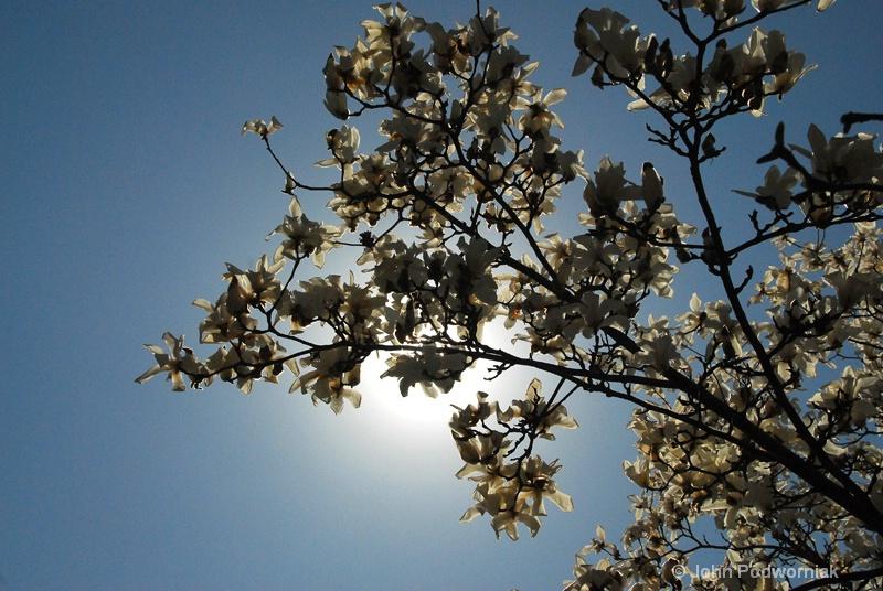 Blossums - ID: 11780768 © john podworniak