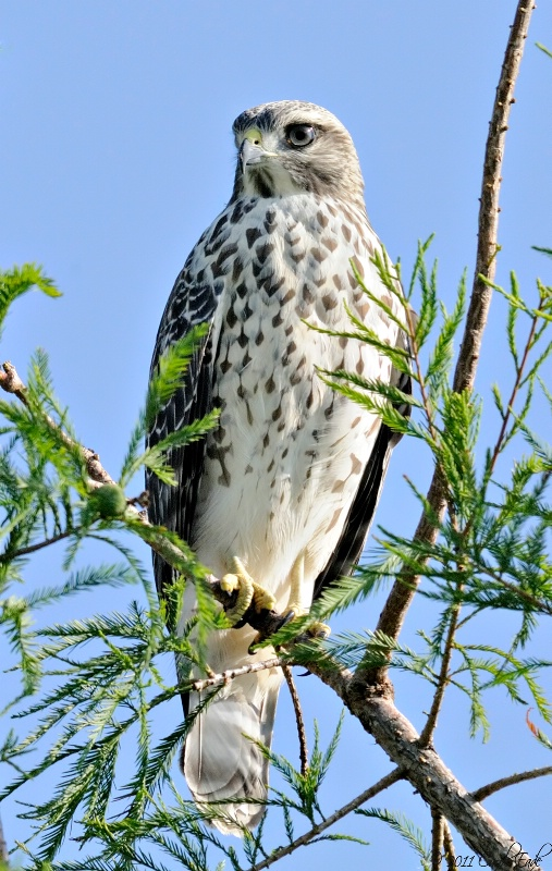 Falcon's Rest - ID: 11787049 © Carol Eade