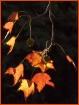 * Autumn's Sp...