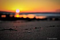 Early Mornin Shell