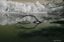 eyes of the lake