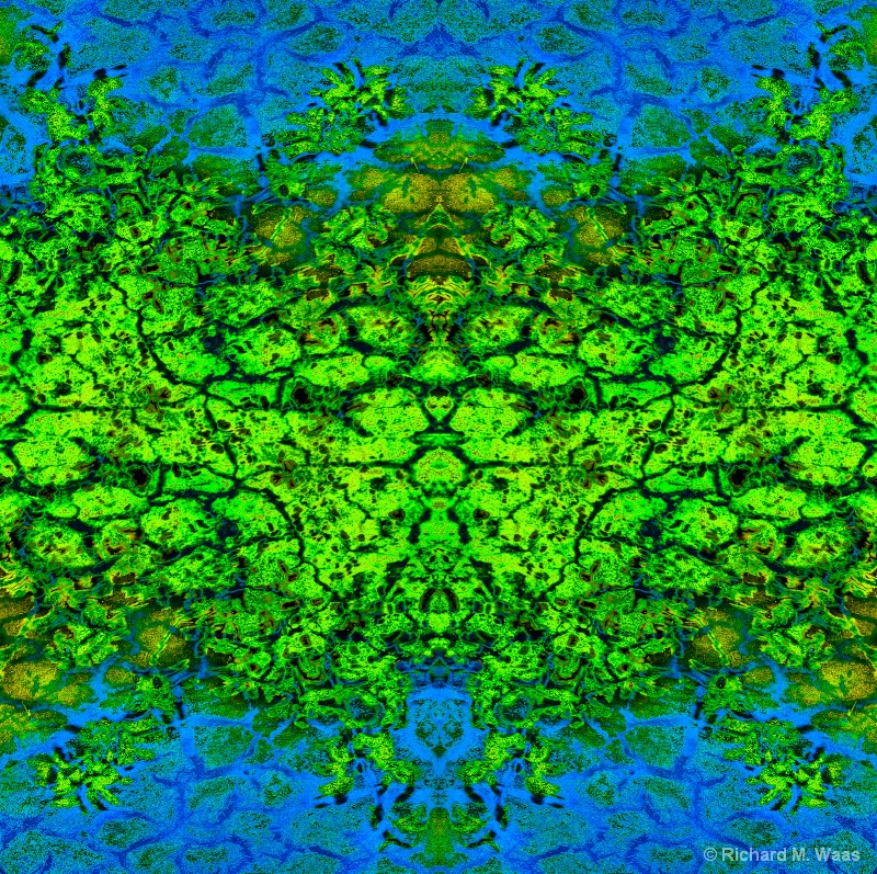Reflection at the Wetlands - ID: 11803473 © Richard M. Waas
