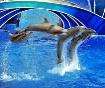 Sea World Dolphin...