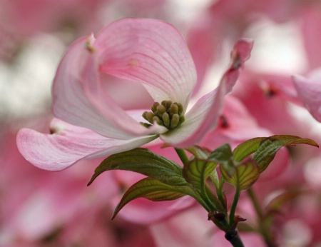InThe Pink