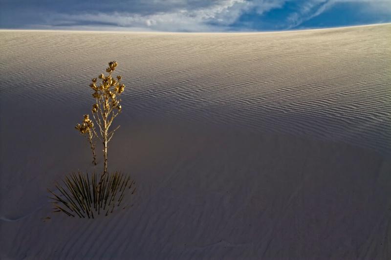Glimmer Of Hope - ID: 11809728 © Karen Celella