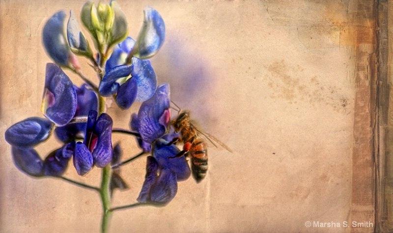Bee and bluebonnet