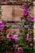 fencing floral