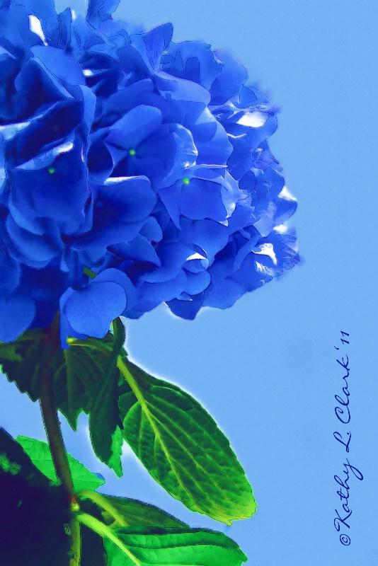 Southern Blue Hydrangea Watercolor