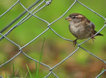 Birdie on a wire