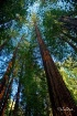 Muir Woods - May ...
