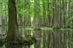 Cypress Bog