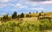 Niihau View
