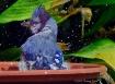 Ah, joy! Water!
