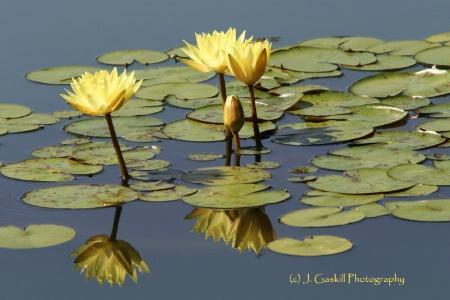 Natural Beauty, Naturally Reflected