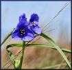 Flower Angles