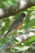 Robin in Natural ...