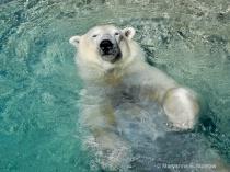 Cooling Off! (Tweaked)