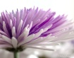 Floral Tranquilit...