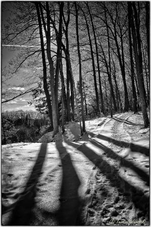Long Shadows, B&W