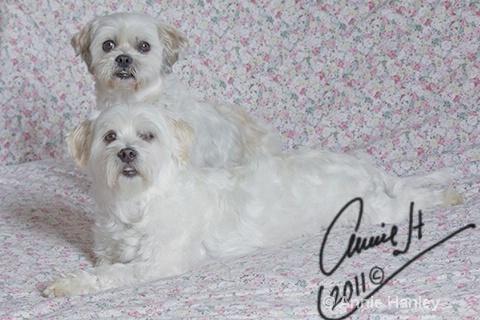 We got caugh on Mum's bed! - ID: 11939663 © Ana Hanley