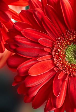 Petals Rule
