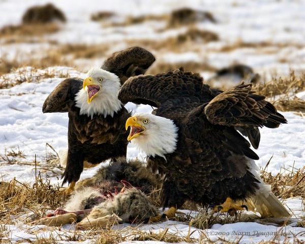 the defenders - ID: 11960602 © Norman W. Dougan