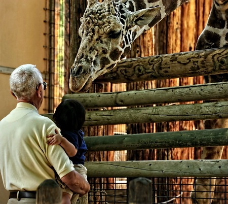 Chaffee Zoo Mourns Death of Baby Giraffe