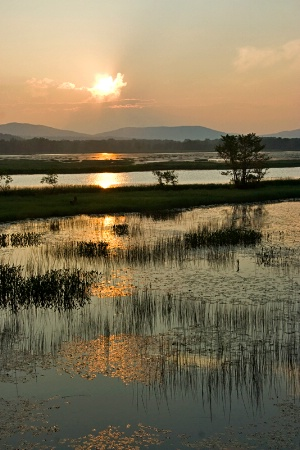An Evening on the Marsh
