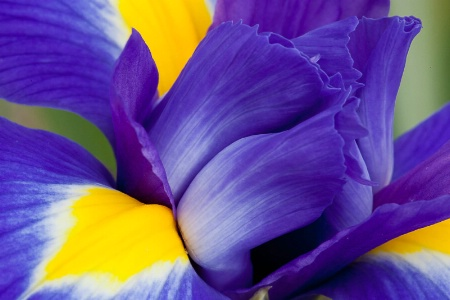 Lovely LSU Colors!