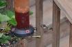 My first hummingb...