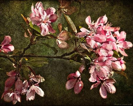 Rendered Blooms