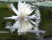 Reflections Beyon...