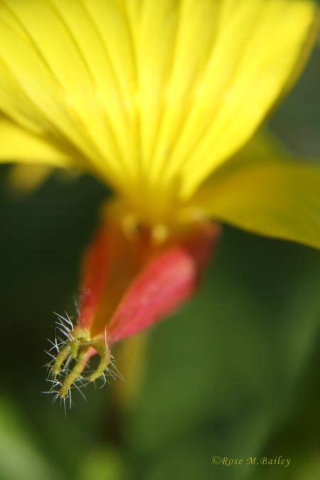 A Pretty Prickly